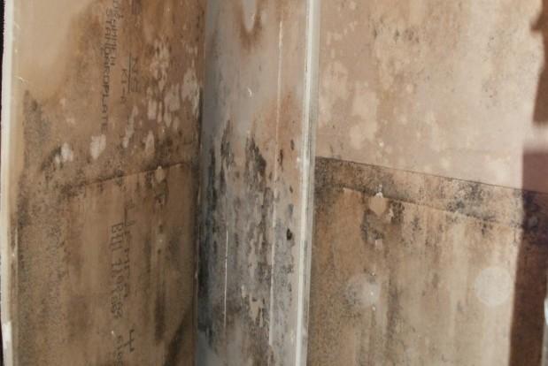 Bilden visar mögel i samband med ISKADs mögelsanering
